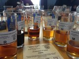 Beer Judging at Southampton Beer Festival - photo credit: Graham Church.