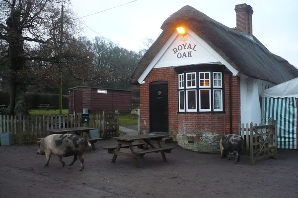 A view of the Royal Oak, Fritham